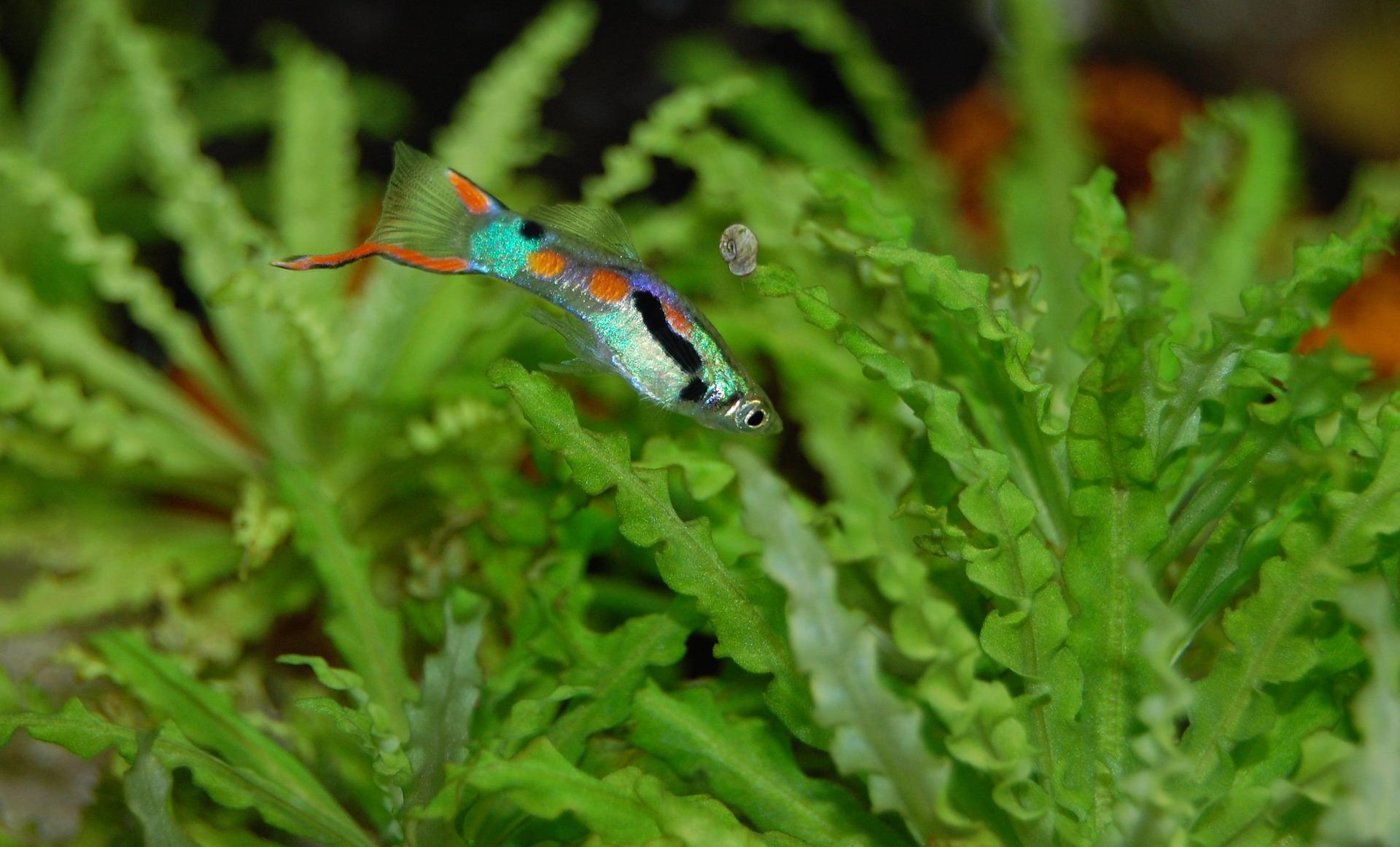 ¡A mi pez la acosa un guppy depravado!
