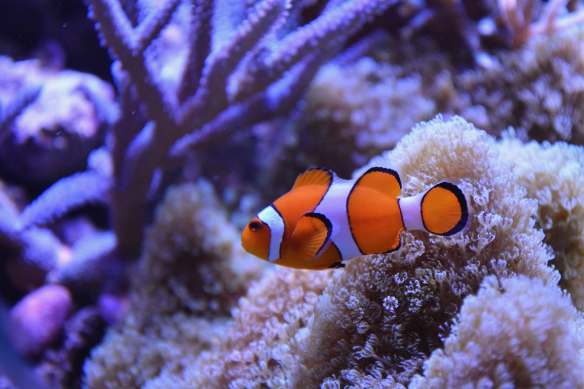 Las especies de peces más comunes