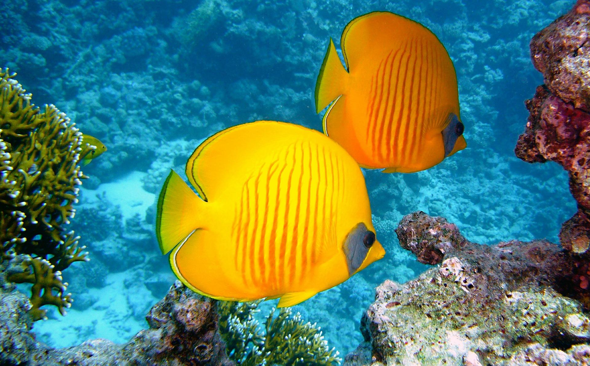 Los cinco peces más bellos del mundo